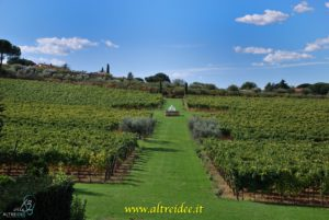 FontanaCandida - casa vitivinicola